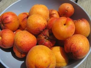 aprium harvest